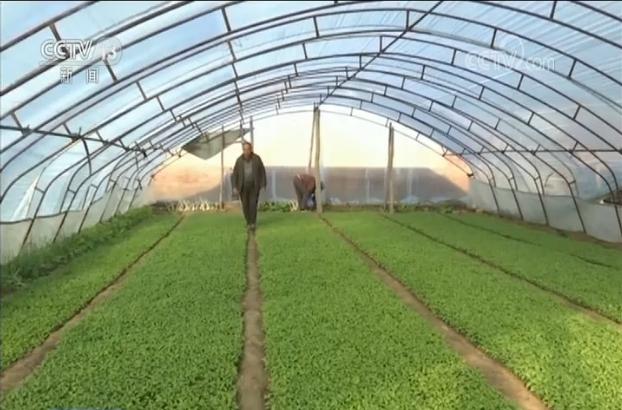 抓好春耕春管 发展特色农业